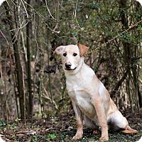 Adopt A Pet :: Archie - South Dennis, MA