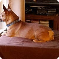 Adopt A Pet :: Smitty - Salem, OR