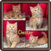 Adopt A Pet :: Chester - Jeffersonville, IN