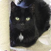 Adopt A Pet :: Susu - Bradenton, FL