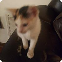 Adopt A Pet :: Freckles - Fayetteville, GA