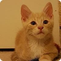 Adopt A Pet :: Opus - Tucson, AZ