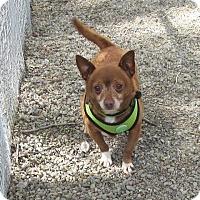 Adopt A Pet :: Alfred - San Francisco, CA