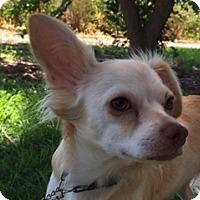 Adopt A Pet :: BINK - Elk Grove, CA