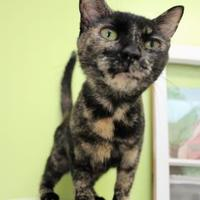 Adopt A Pet :: Veda - Lynchburg, VA