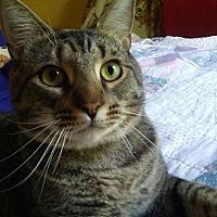 Adopt A Pet :: King - Covington, KY