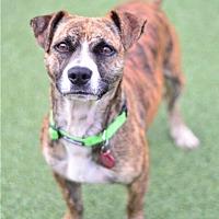 Adopt A Pet :: Whiskey - San Francisco, CA