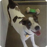 Adopt A Pet :: Patches - Winter Haven, FL