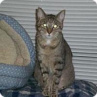 Adopt A Pet :: Louis - Laguna Woods, CA