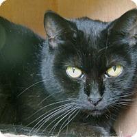 Adopt A Pet :: Posey - Pineville, NC