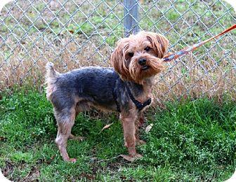 Skye Terrier Mix Dog for adoption in Muldrow, Oklahoma - Brady