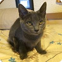 Adopt A Pet :: Kimmie - St. Louis, MO
