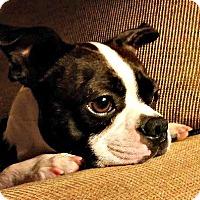 Adopt A Pet :: Max - Greensboro, NC