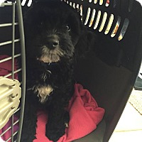 Adopt A Pet :: Riley - Brant, ON
