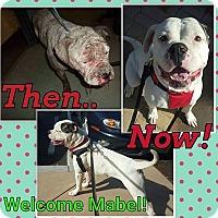 Adopt A Pet :: Mabel - Sacramento, CA