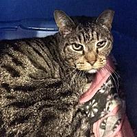 Adopt A Pet :: Carlos - Morgan Hill, CA