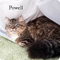 Adopt A Pet :: Powell - Shelton, WA