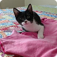 Adopt A Pet :: Melvin - Modesto, CA