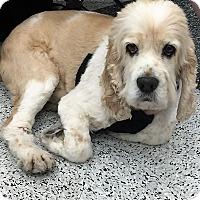 Adopt A Pet :: Rocco-PENDING ADOPTION - Sacramento, CA