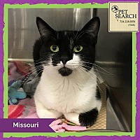 Adopt A Pet :: Missouri - Washington, PA
