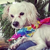 Adopt A Pet :: Potter 10 yr 12 lb (7/6/16) - Kermit, WV