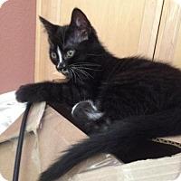 Adopt A Pet :: Taff - Walnut Creek, CA