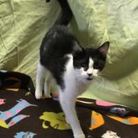 Adopt A Pet :: Nora - Salem, OH