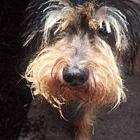 Adopt A Pet :: Aubrey - Houston, TX