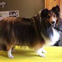 Adopt A Pet :: Brylee - Circle Pines, MN