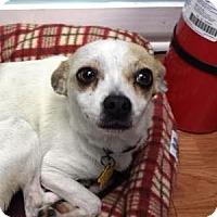 Adopt A Pet :: Dulce - Shawnee Mission, KS