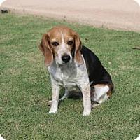 Adopt A Pet :: Juney - Phoenix, AZ