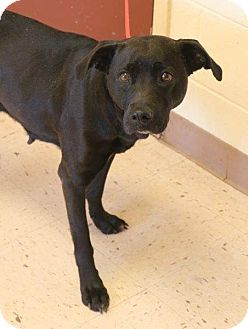 Labrador Retriever Mix Dog for adoption in McDonough, Georgia - Jema