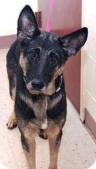 German Shepherd Dog Dog for adoption in McDonough, Georgia - Hildee