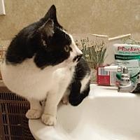 Adopt A Pet :: Sylvester - McEwen, TN