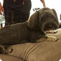 Adopt A Pet :: Talulah - Fresno, CA