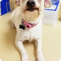 Adopt A Pet :: Molly - Monrovia, CA