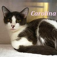 Adopt A Pet :: Carolina - El Cajon, CA