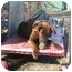 Photo 3 - Labrador Retriever/Chesapeake Bay Retriever Mix Dog for adoption in Portsmouth, Rhode Island - Freddie