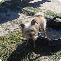 Adopt A Pet :: Chewy - Lockhart, TX