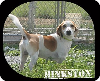 Beagle Mix Dog for adoption in Mt Sterling, Kentucky - Marley
