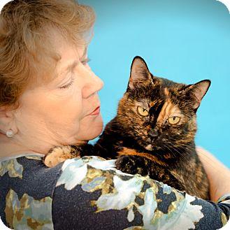 Domestic Shorthair Cat for adoption in Houston, Texas - Sasha
