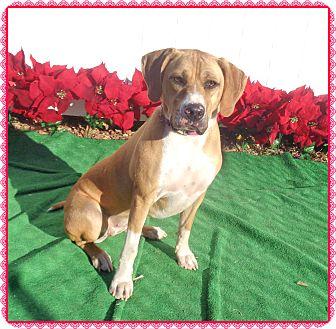 Hound (Unknown Type) Mix Dog for adoption in Marietta, Georgia - BRIANNA