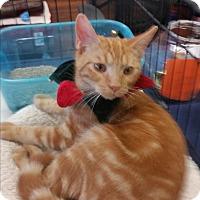 Adopt A Pet :: Rudy - Fairborn, OH
