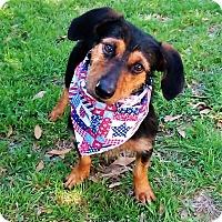Adopt A Pet :: Willie - Vernon, TX