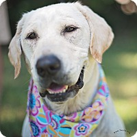 Adopt A Pet :: Lexie - Kingwood, TX