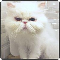 Adopt A Pet :: Nellie May - Gilbert, AZ