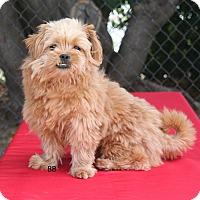 Adopt A Pet :: Hamlet - Santa Barbara, CA