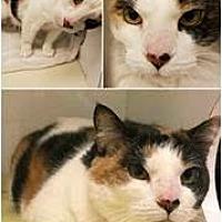 Adopt A Pet :: Louise - Herndon, VA