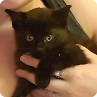 Adopt A Pet :: Sasha - Brainardsville, NY