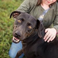 Adopt A Pet :: Jack - Southbury, CT